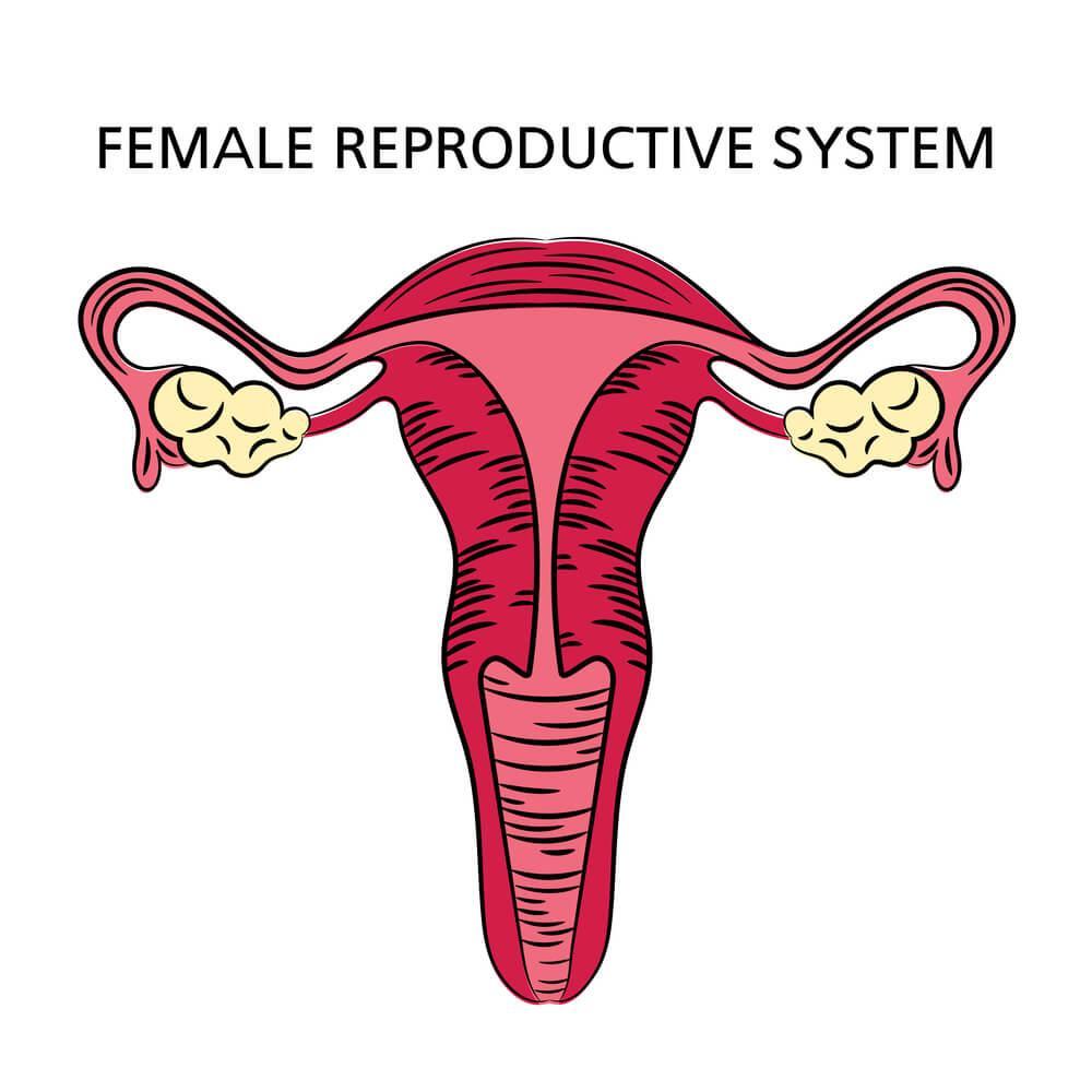 ženské pohlavné orgány